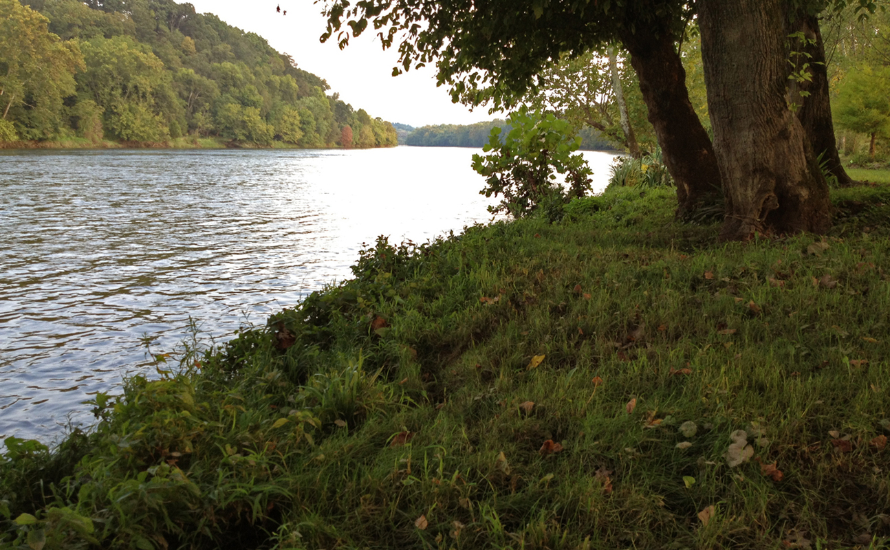 Bank of the Holston River at the site of the Holston River Tree House in Mascot, TN